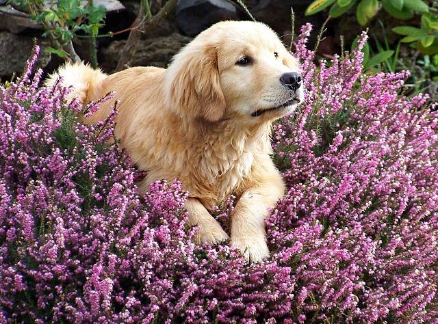 Evitaq ue los perros destrocen el jardín