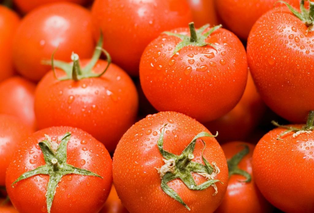 Trucos para cultivar tomates