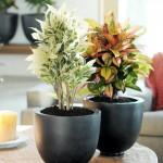 Consejos para evitar las plagas en las plantas