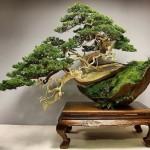 Los cuidados del bonsai