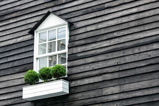 arbustos-ventanas