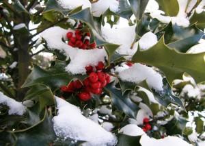 Mantenimiento jardin diciembre
