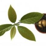 paso-3-cultivar-aguacate-en-casa
