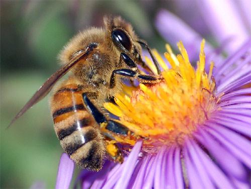 Consejos para ahuyentar las abejas en tu jardín