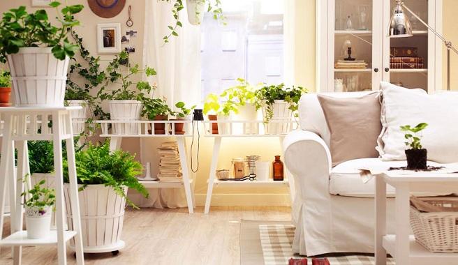 La importancia d tener plantas en casa