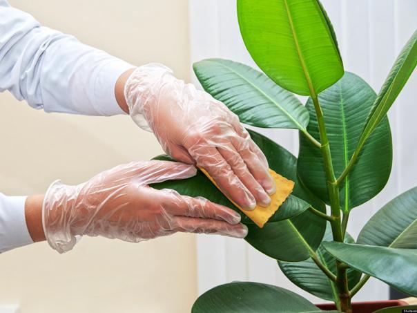 Mantenimiento de plantas