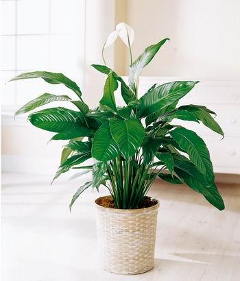 Regar las plantas cuando estás de vacaciones
