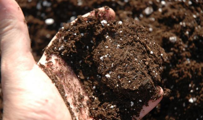 Tipos de fertilizante para tu jardín
