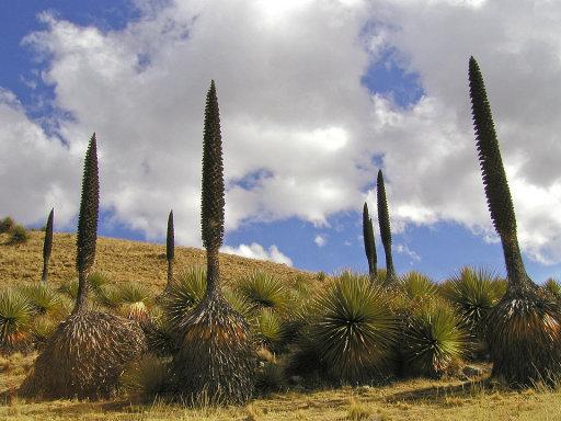 Las especies vegetales más extrañas del mundo