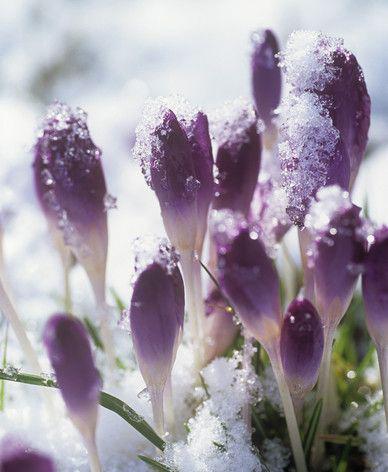 Jardineria Marve |Mantenimiento jardin en invierno