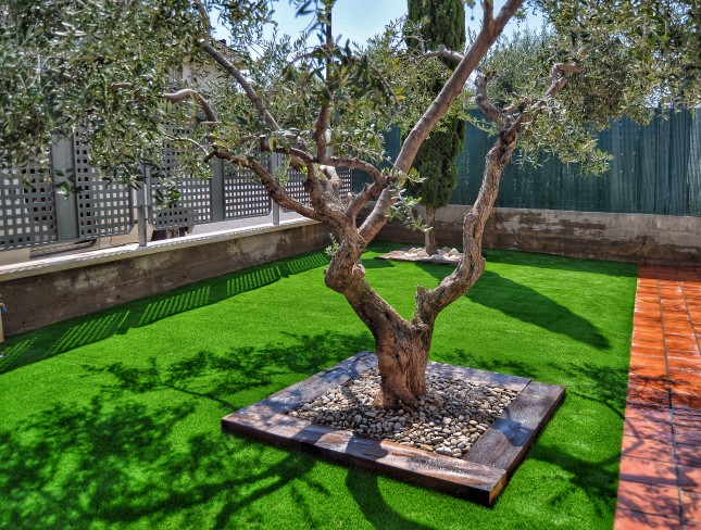 C mo plantar un rbol en un patio peque o jardinera marve for Jardineras para patios pequenos