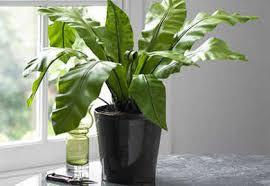 Conoce los beneficios de tener plantas y flores en tu casa for Plantas artificiales para interiores