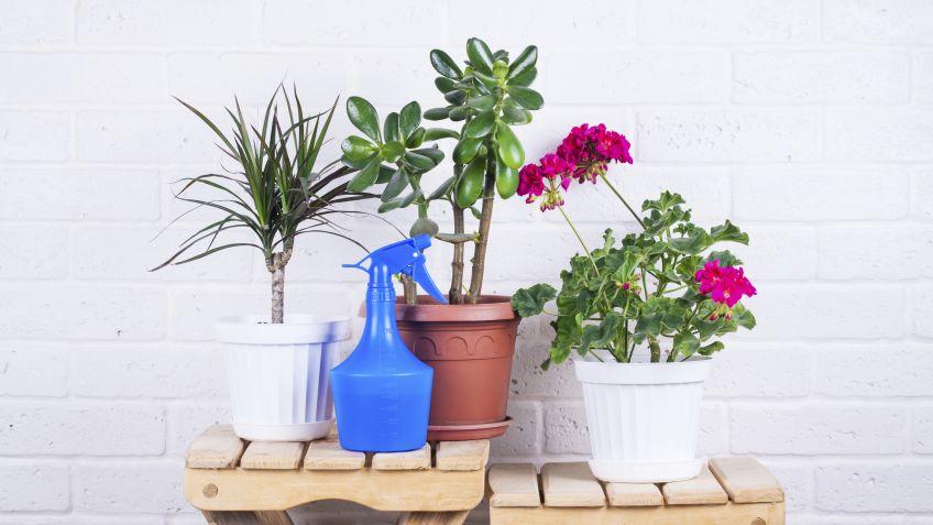 como-saber-si-tu-planta-tiene-la-humedad-suficiente-para-crecer