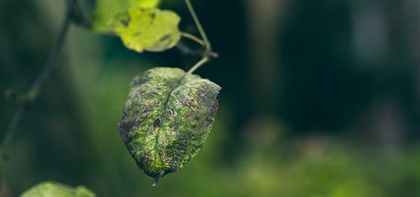 trucos-regar-plantas